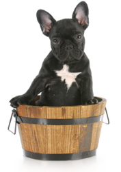 puppy-in-tub